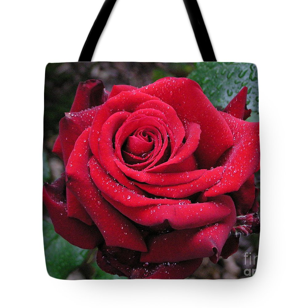 Rose Tote Bag featuring the photograph Icy Rose by Louise Magno