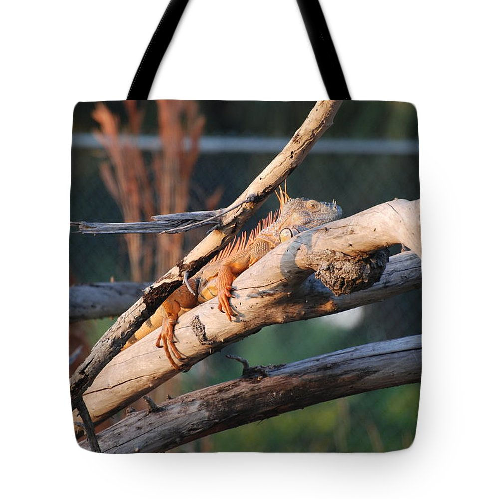 Branches Tote Bag featuring the photograph Igauna On A Stick by Rob Hans
