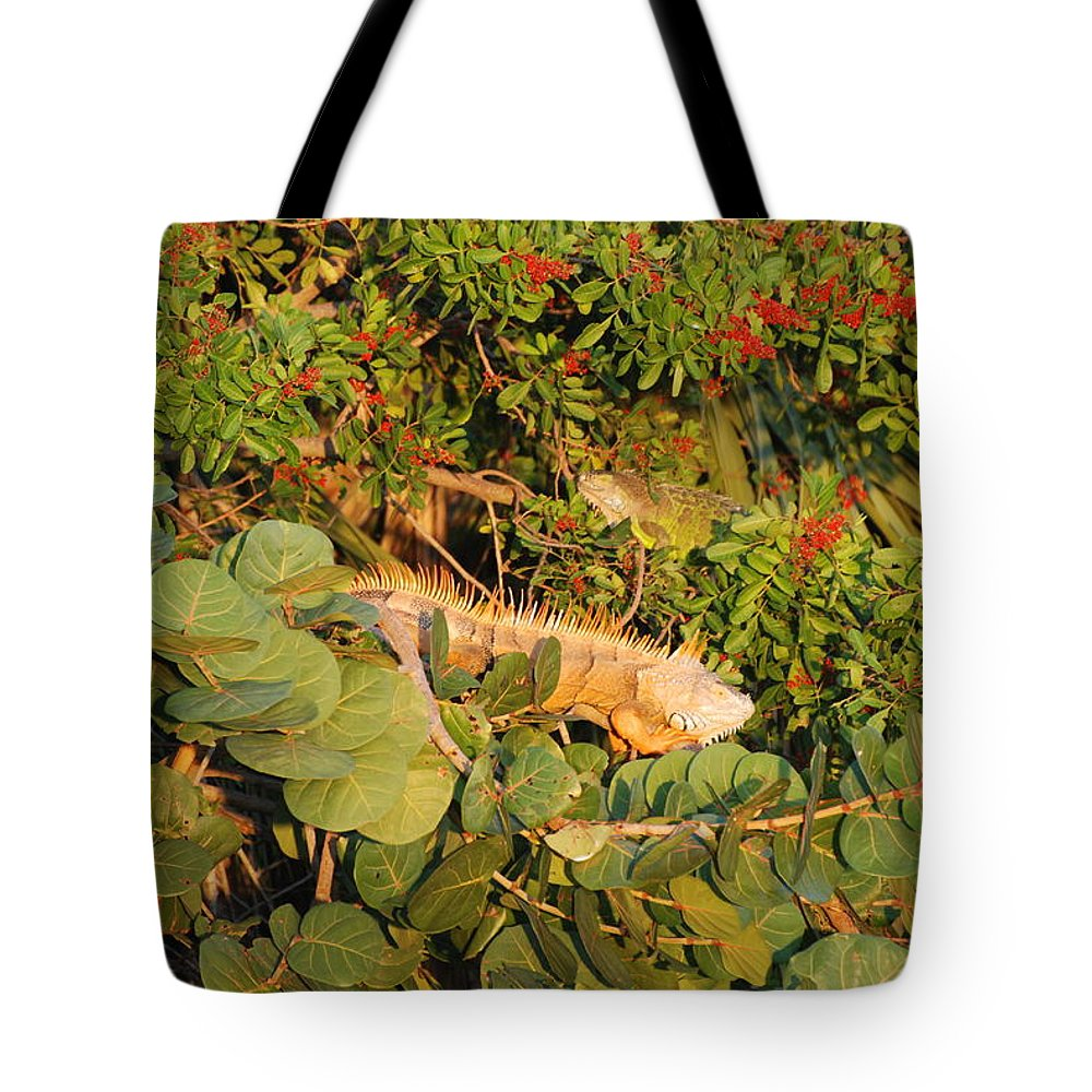 Sunset Tote Bag featuring the photograph Iguanas by Rob Hans