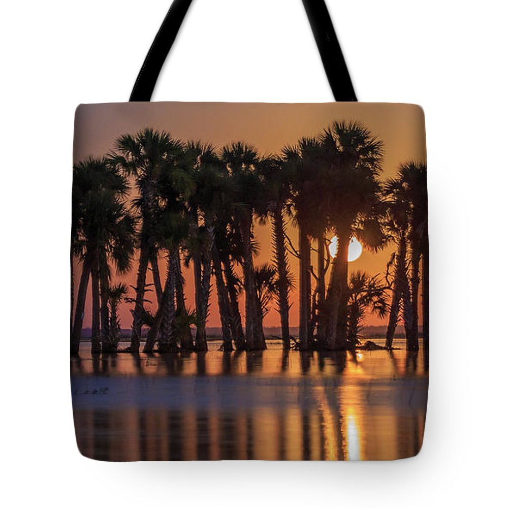 Florida Tote Bag featuring the photograph Illuminated Palm Trees by Stefan Mazzola