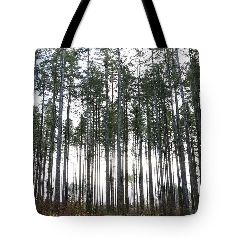 Trees Tote Bag featuring the photograph Illumination by Dani Keating