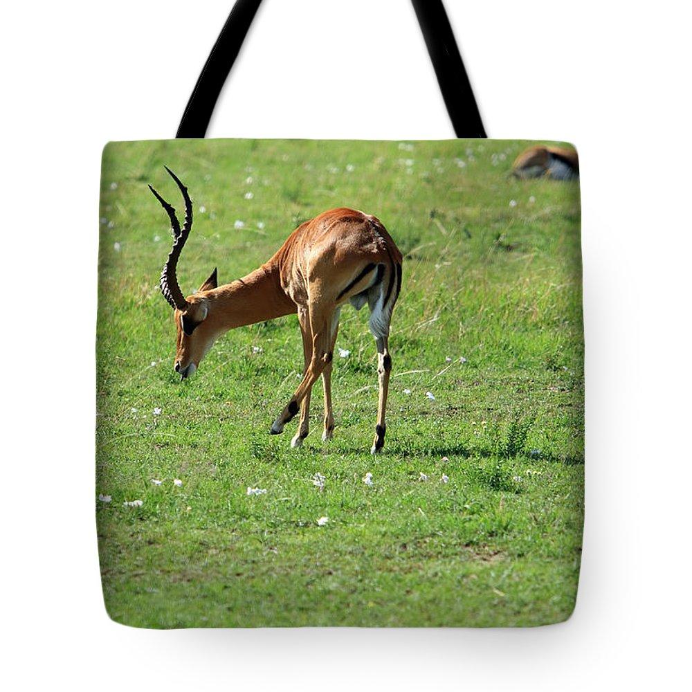 Deer Tote Bag featuring the photograph Impala Buck by Aidan Moran