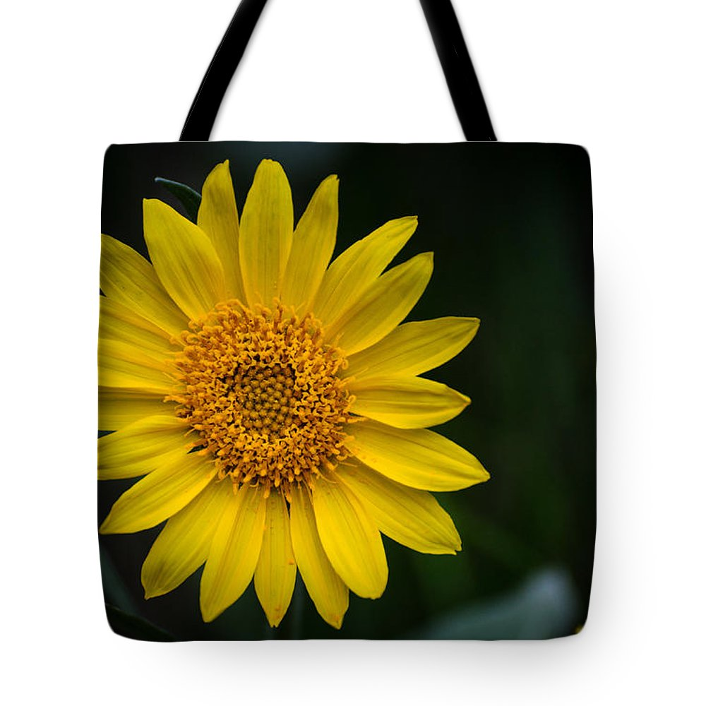 Sunflower Tote Bag featuring the photograph In Full Bloom by Omer Vautour