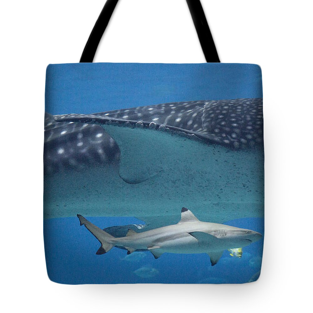 Shark Tote Bag featuring the photograph In Good Company by Betsy Knapp