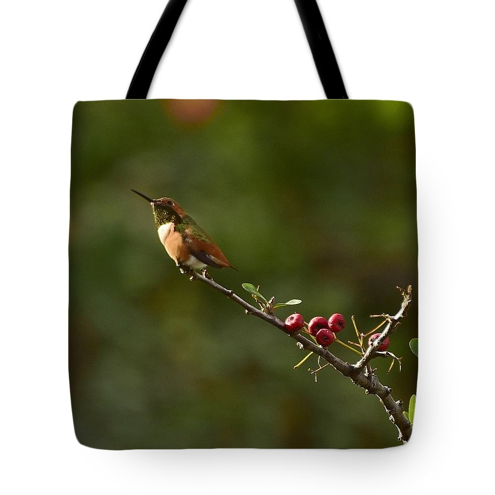 Linda Brody Tote Bag featuring the photograph In Line With The Branch by Linda Brody