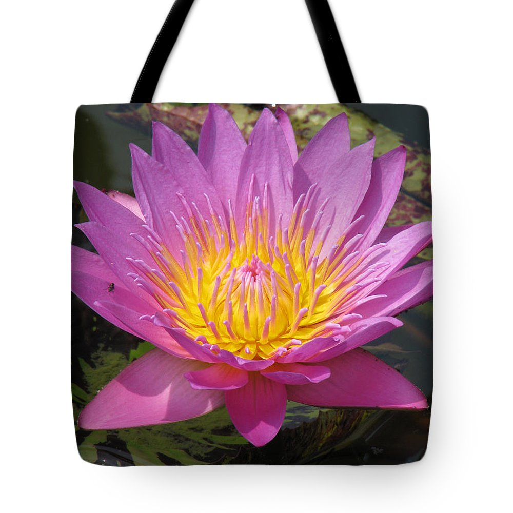 Lotus Tote Bag featuring the photograph In Position by Amanda Barcon