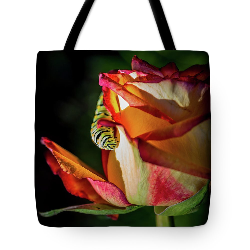 Caterpillars Tote Bag featuring the photograph In The Beginning by Karen Wiles