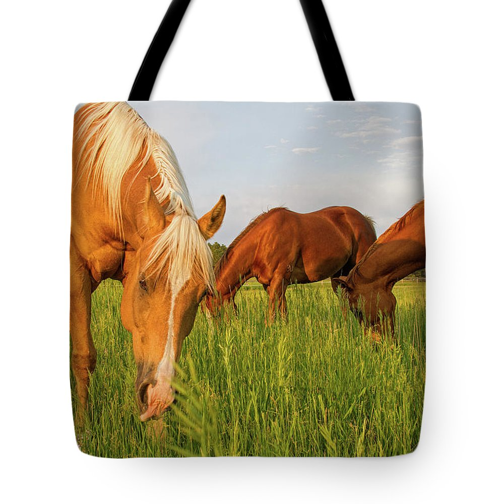 Quarter Horse Tote Bag featuring the photograph In The Grass by Alana Thrower