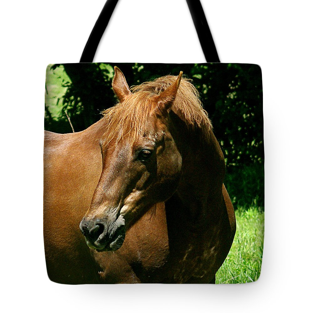 jenny Gandert Rexx red Hot Rolexx Chestnut Light Pasture Sun Shadows Darks Head Copper Tote Bag featuring the photograph In The Light by Jenny Gandert