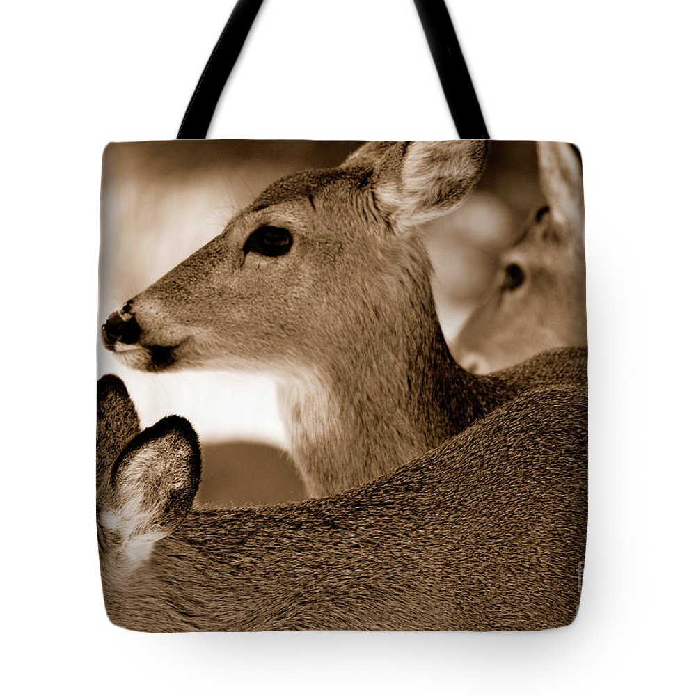 Deer Tote Bag featuring the photograph In The Middle by Lori Tambakis