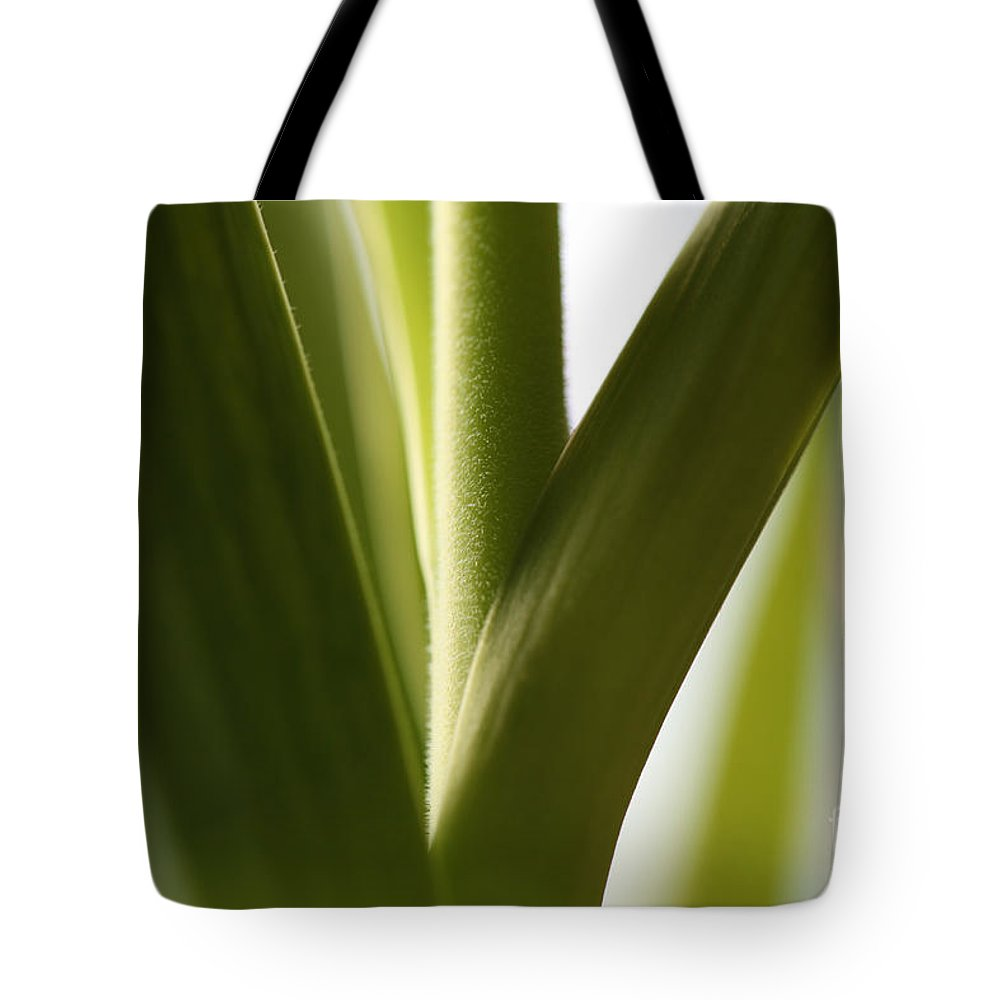 Leaves Tote Bag featuring the photograph In The Spotlight Of Support by Amanda Barcon