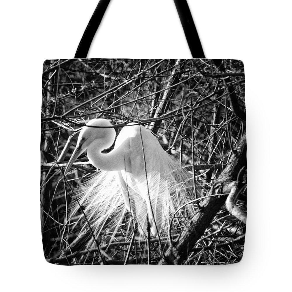 Birds Tote Bag featuring the photograph In The Trees by Phill Doherty