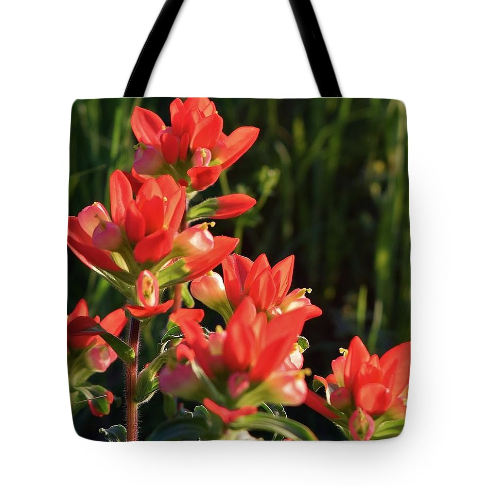 Texas Tote Bag featuring the photograph Indian Paintbrush by Charles F Miller