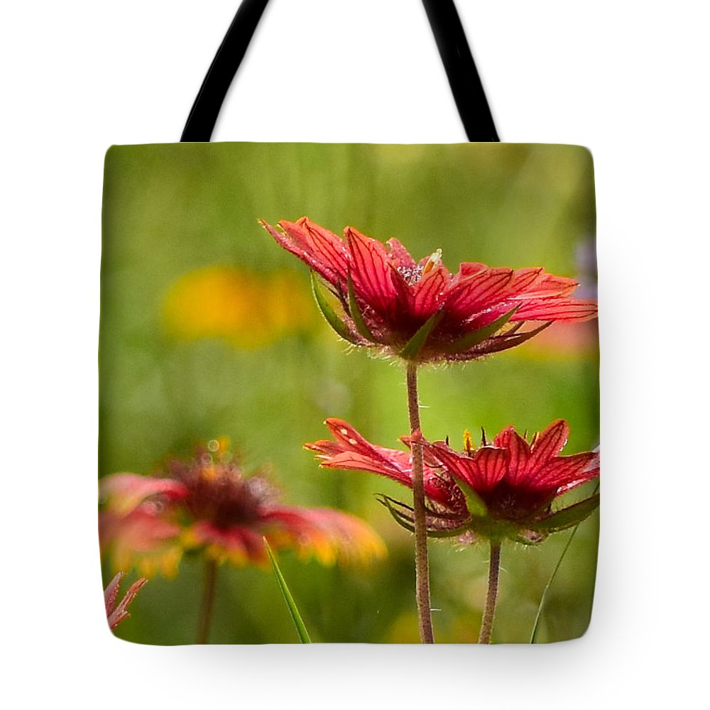 Flowers Tote Bag featuring the photograph Bright Indian Blanket by Jeanette Fiveash