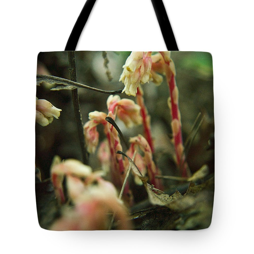 Cove Tote Bag featuring the photograph Indian Pipe 4 by Douglas Barnett