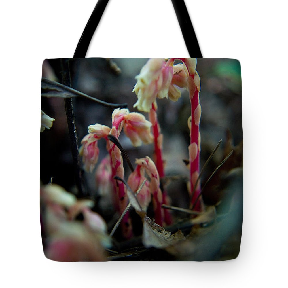 Tote Bag featuring the photograph Indian Pipe 5 by Douglas Barnett