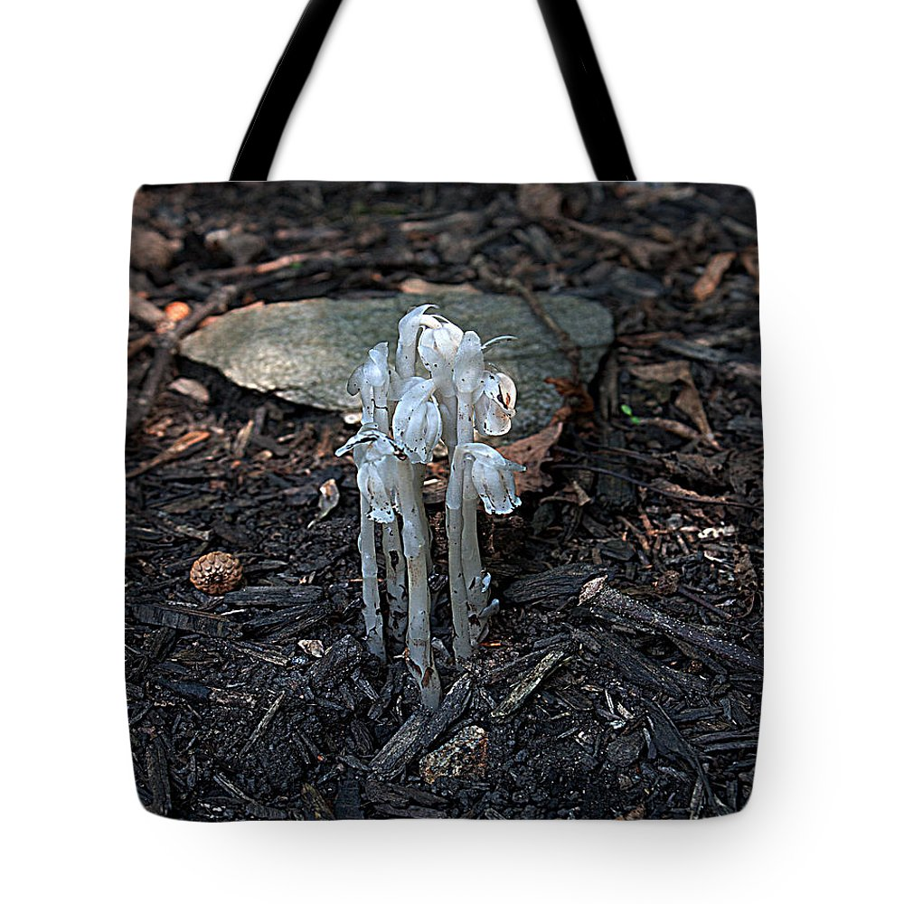 Mushrooms Tote Bag featuring the photograph Indian Pipes by Robert Sander