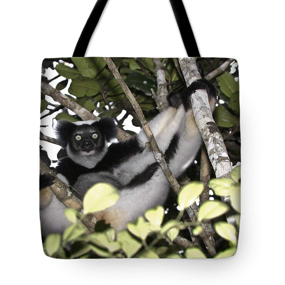 Madagascar Tote Bag featuring the photograph Indri Indri by Michele Burgess