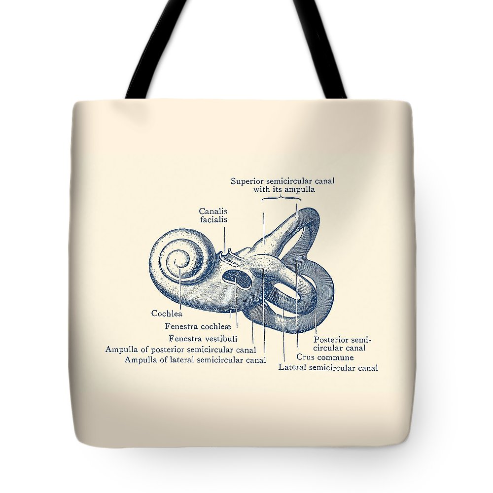 Inner Ear Anatomy Diagram Vintage Poster Tote Bag For Sale By