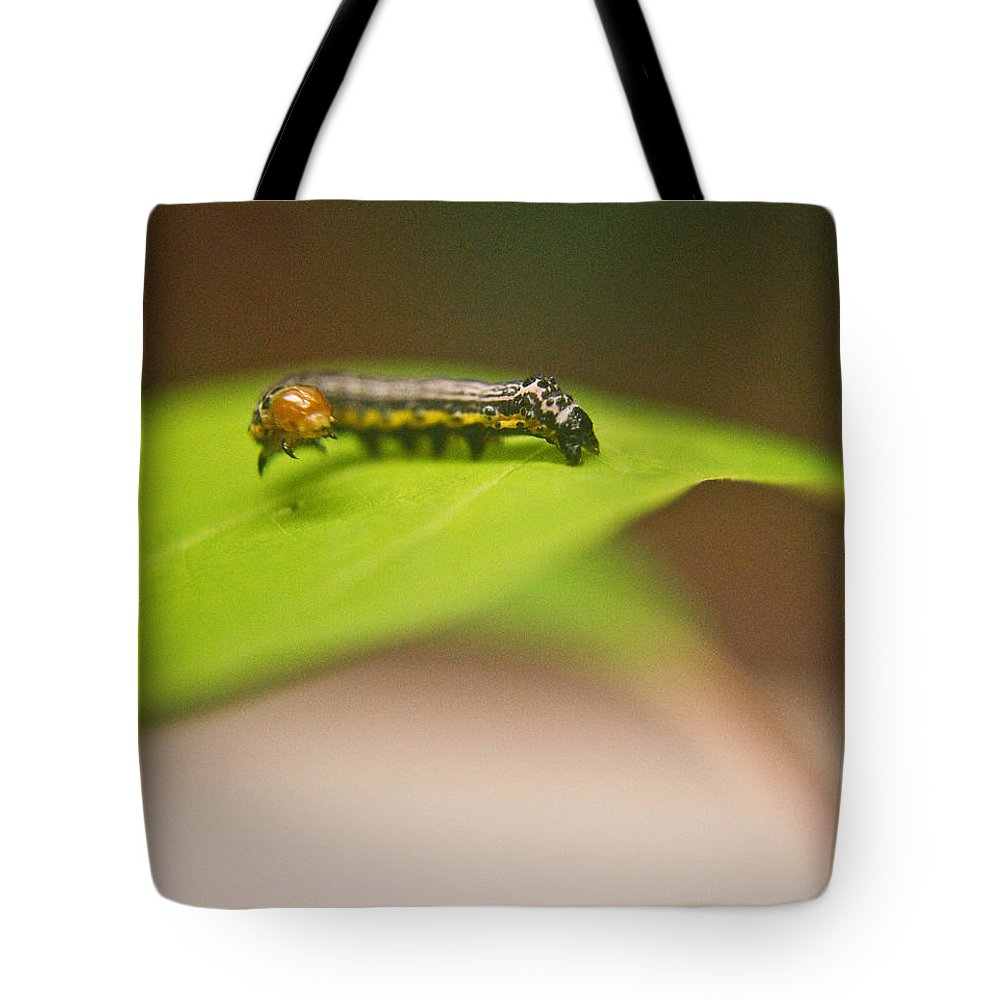 Cove Tote Bag featuring the photograph Insect Larva 1 by Douglas Barnett