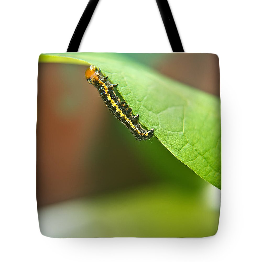 Cove Tote Bag featuring the photograph Insect Larva 2 by Douglas Barnett