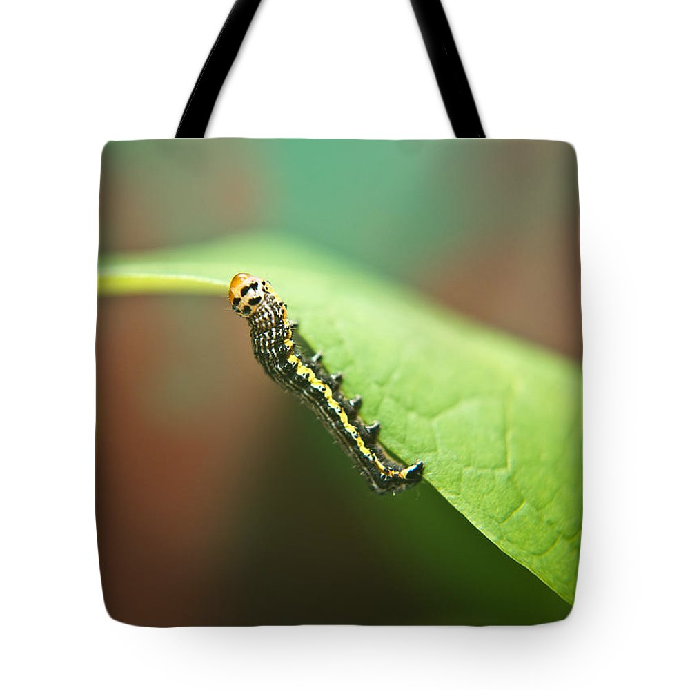 Cove Tote Bag featuring the photograph Insect Larva 3 by Douglas Barnett