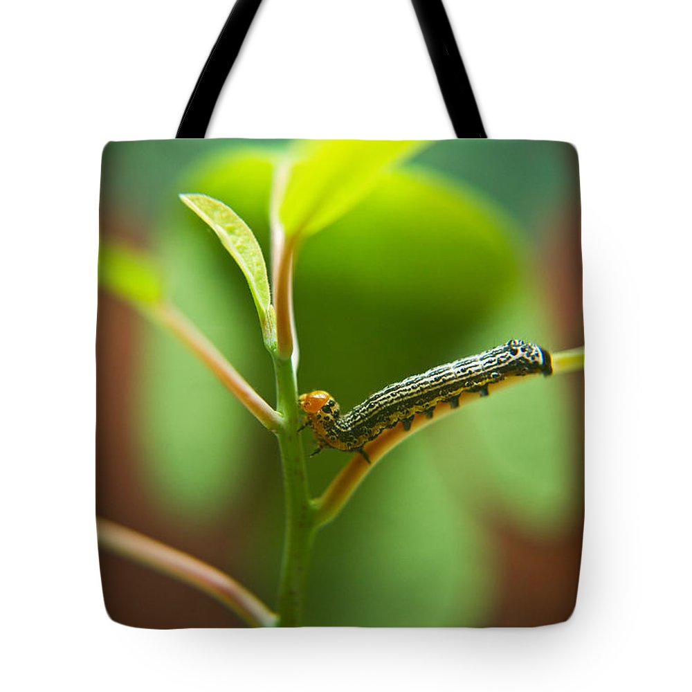 Cove Tote Bag featuring the photograph Insect Larva 5 by Douglas Barnett