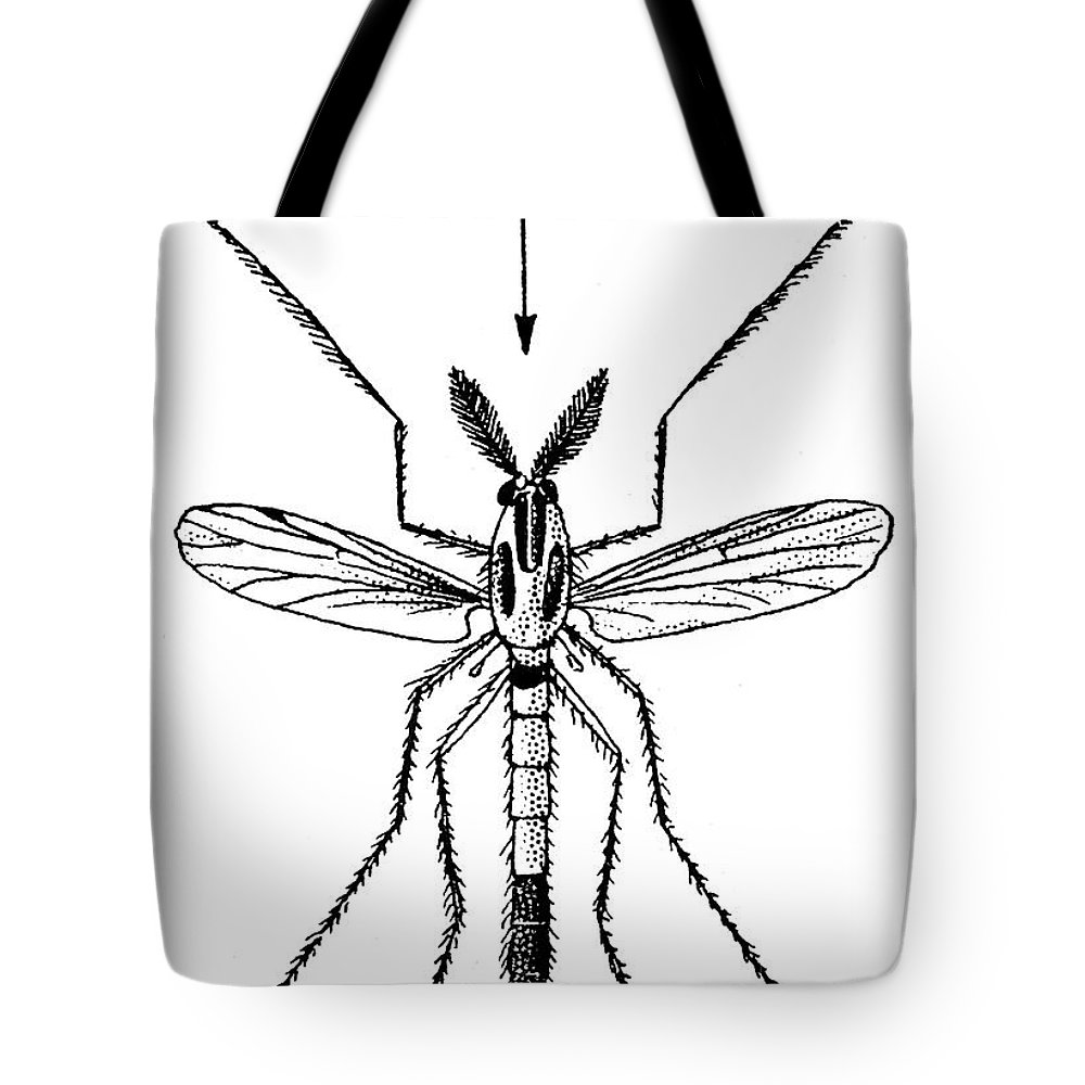 Animal Tote Bag featuring the photograph Insect: Midge by Granger
