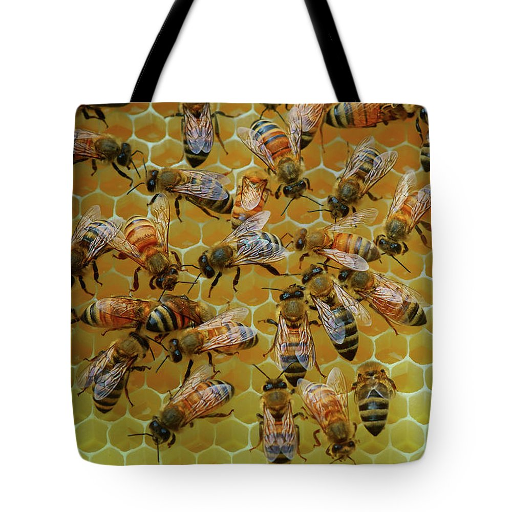 Bees Tote Bag featuring the photograph Inside the Hive by Nikolyn McDonald