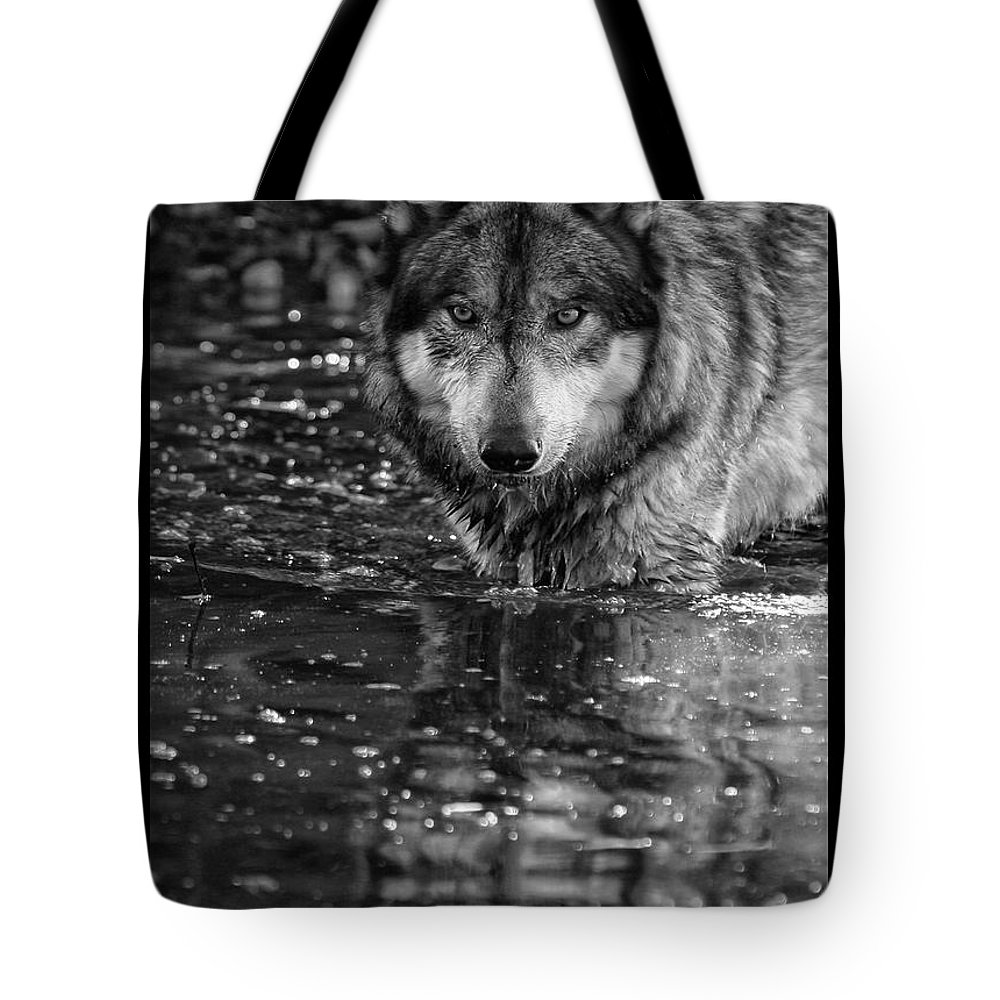 Wolf Wolves Lupine Canis Lupus Wildlife Animal Photography Photograph Tote Bag featuring the photograph Intense Reflection by Shari Jardina