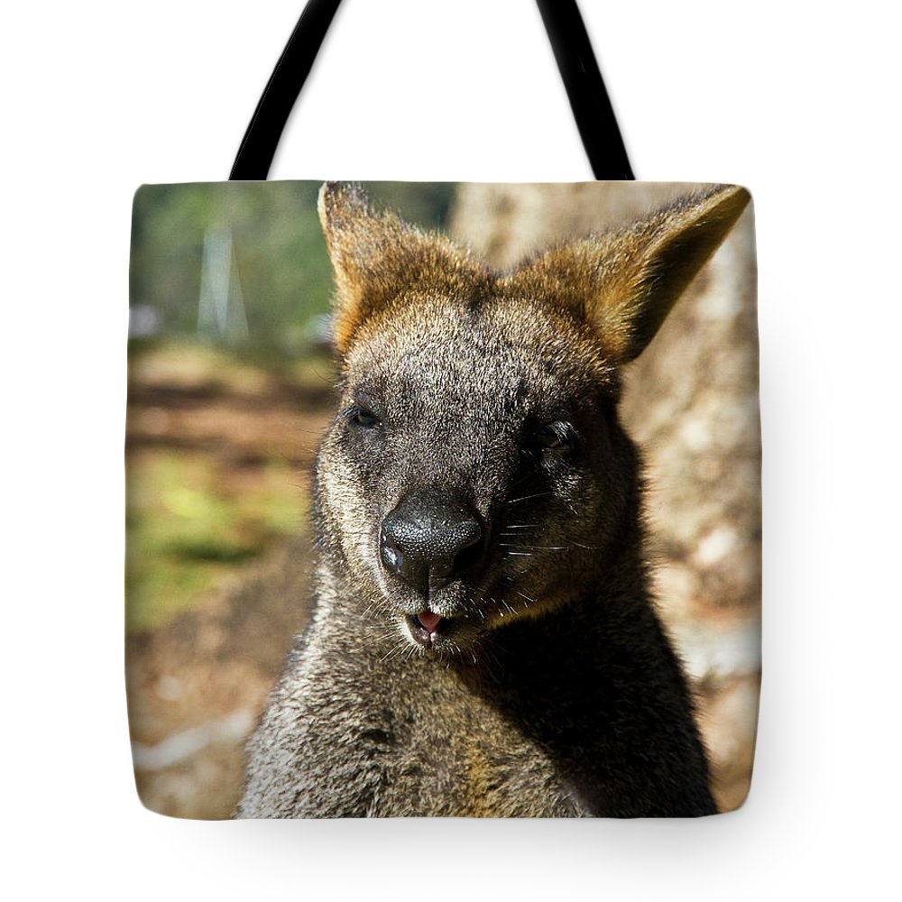 Swamp. Wallaby. Close Up Tote Bag featuring the photograph Interview With A Swamp Wallaby by Miroslava Jurcik