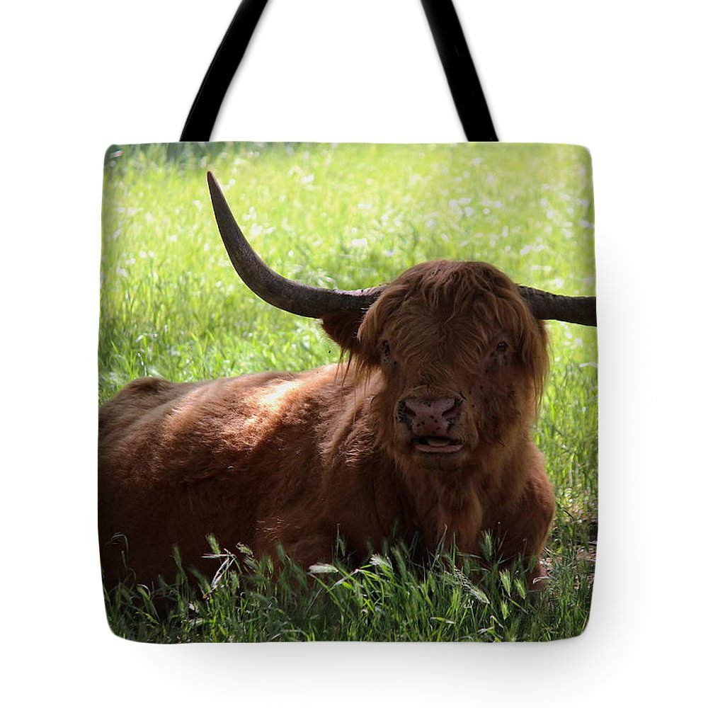 T50yp Tote Bag featuring the photograph Irish Dexter Three by Nicholas Miller