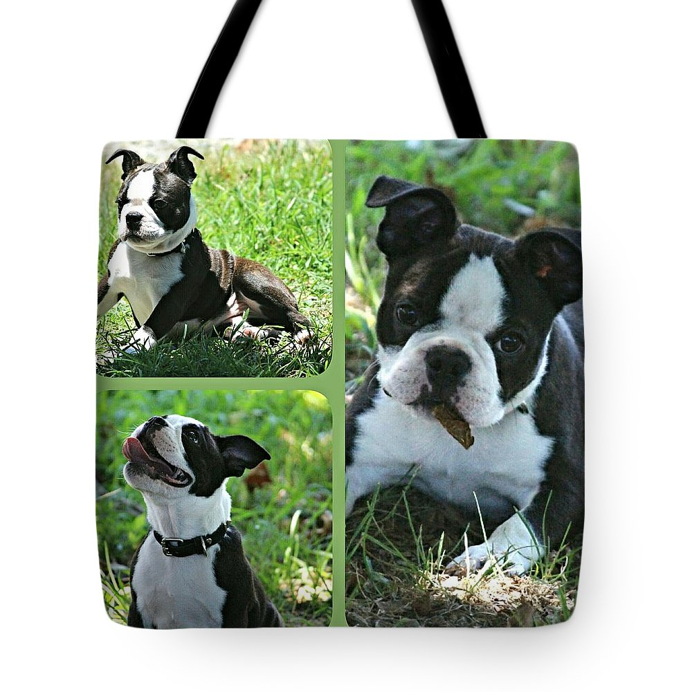 Is Autumn Here Yet? Tote Bag featuring the photograph Is Autumn Here Yet? by Maria Urso