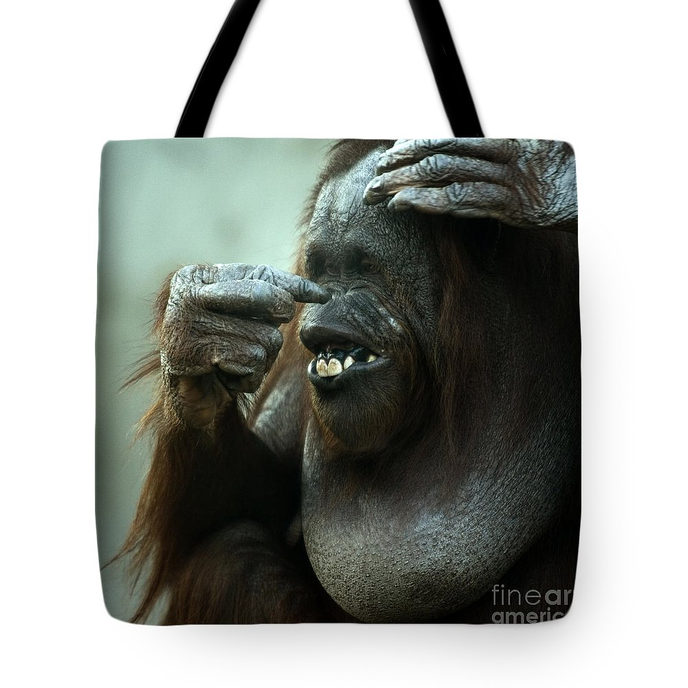 Orangutan Tote Bag featuring the photograph Is That My Nose by Angel Ciesniarska