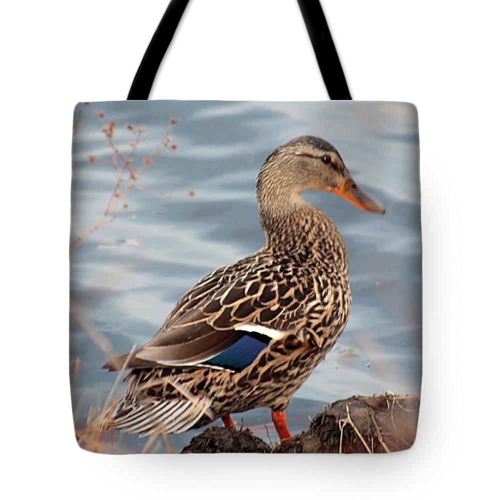 Mallard Tote Bag featuring the photograph Isn't She Lovely by Linda Crockett