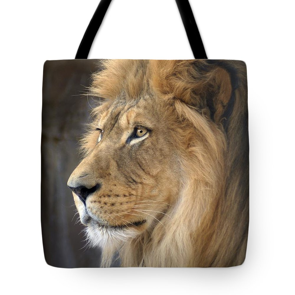Lions Tote Bag featuring the photograph Israel by Bill Stephens