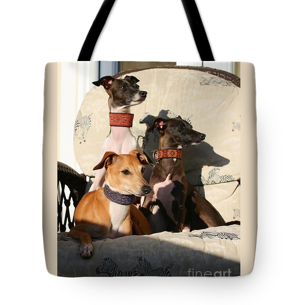 Editorial Tote Bag featuring the photograph Italian Greyhounds by Angela Rath