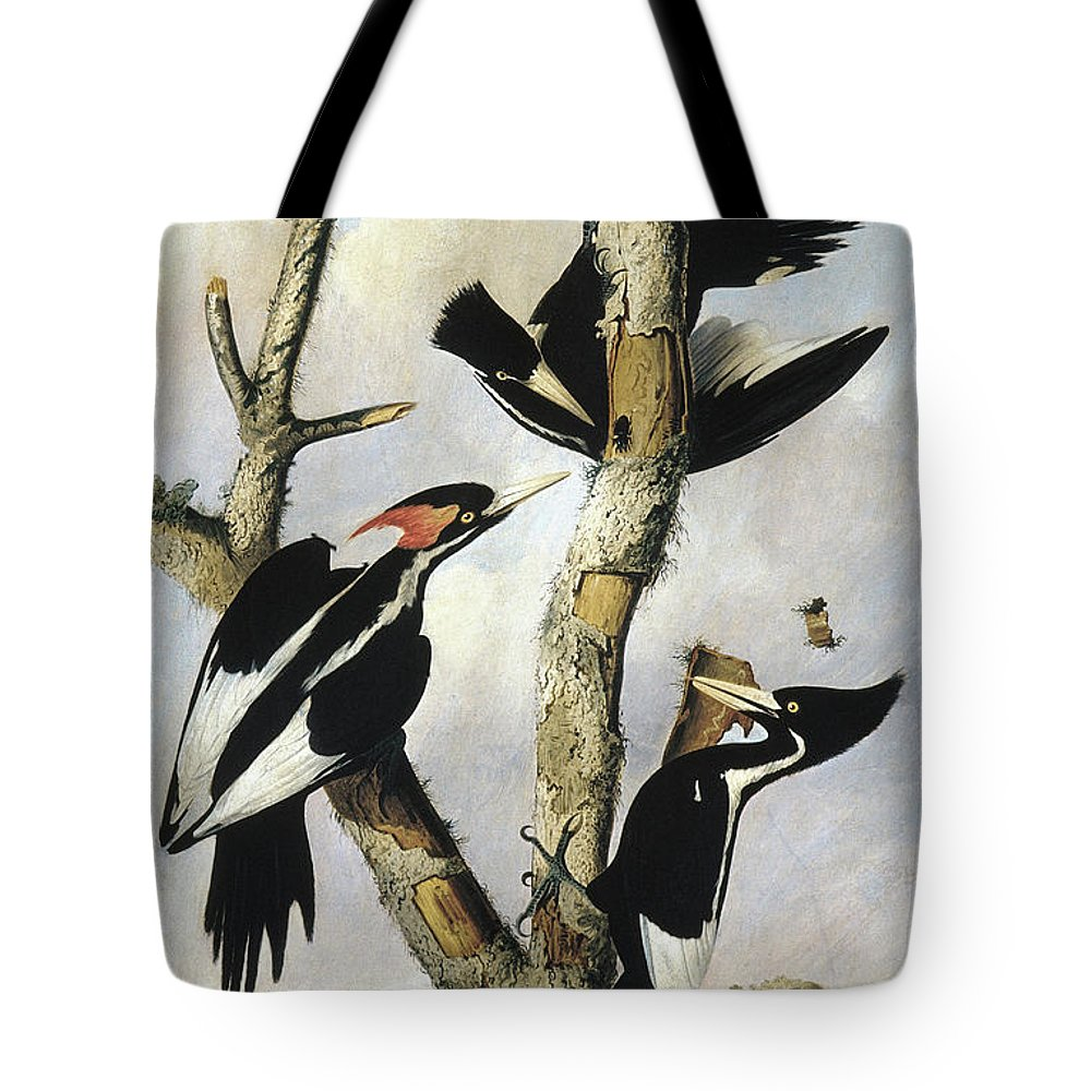 1820 Tote Bag featuring the photograph Ivory-billed Woodpeckers by Granger