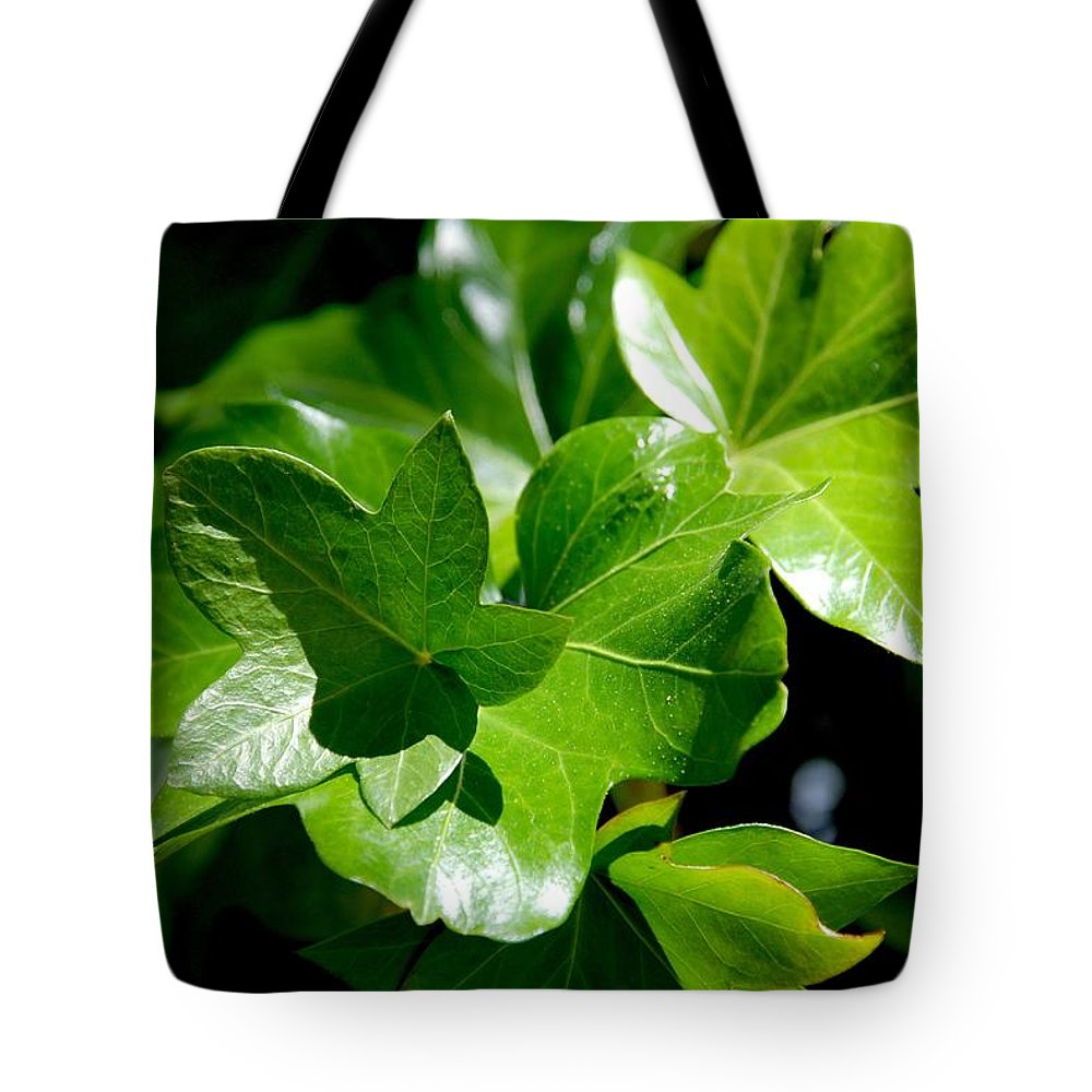 Photography Tote Bag featuring the photograph Ivy In Sunlight by Susanne Van Hulst