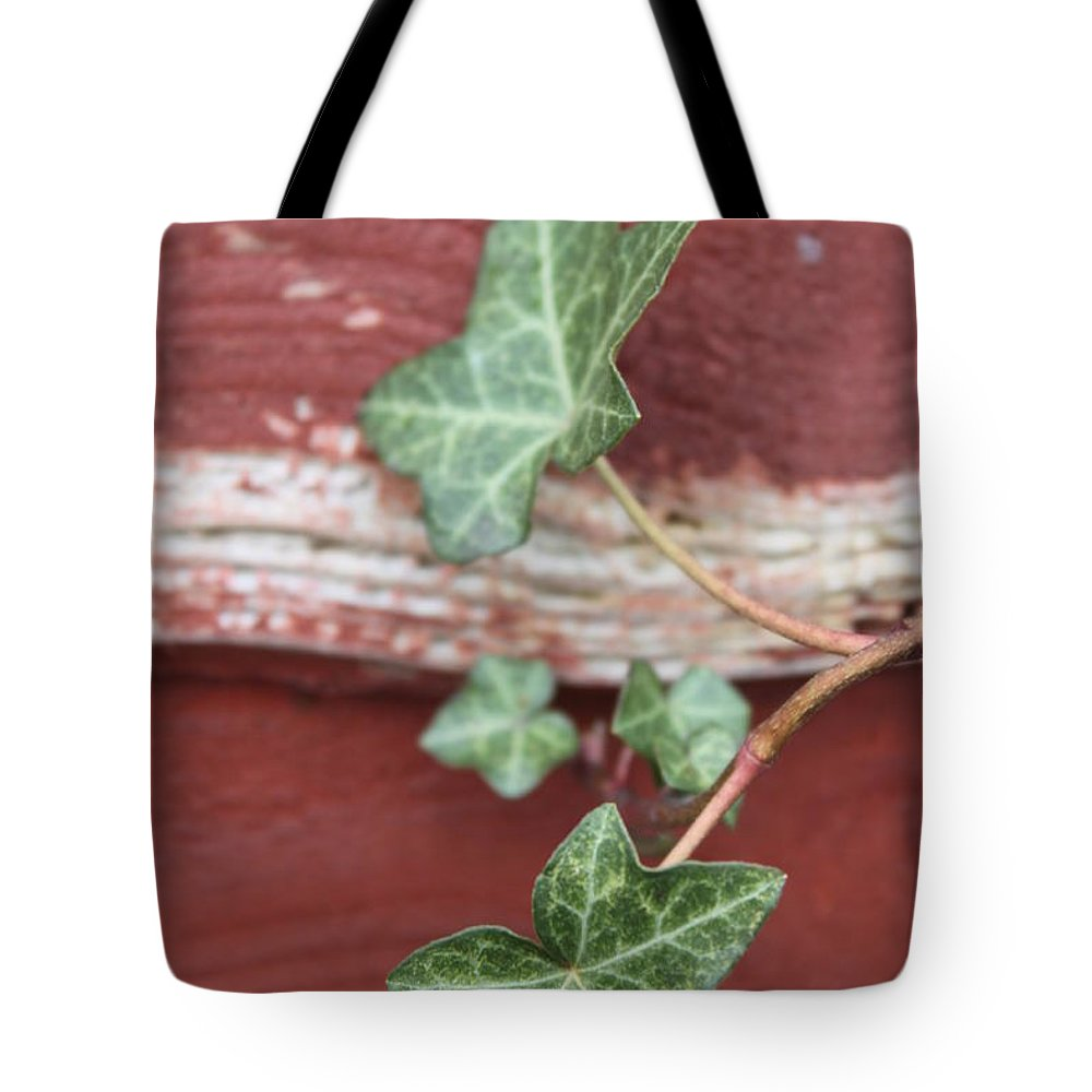 Ivy Tote Bag featuring the photograph Ivy by Lauri Novak