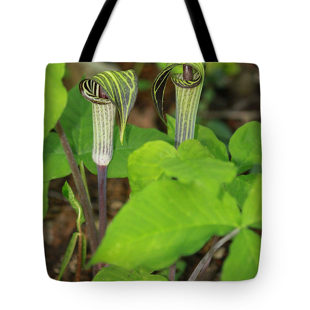 Jack In The Pulpit Tote Bag featuring the photograph Jack In The Pulpit by Suzanne Gaff