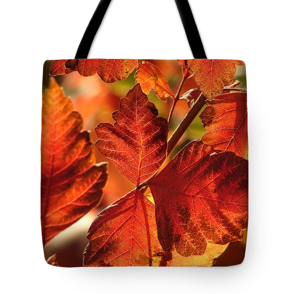Photograph Tote Bag featuring the photograph Jack Painted My Yard by J R Seymour