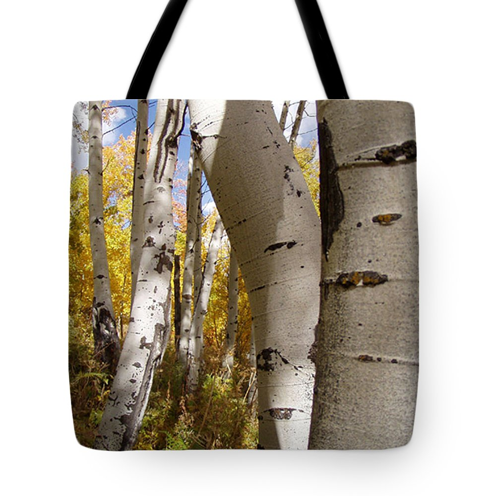 Trees Tote Bag featuring the photograph Jackson Hole Wyoming by Amanda Barcon