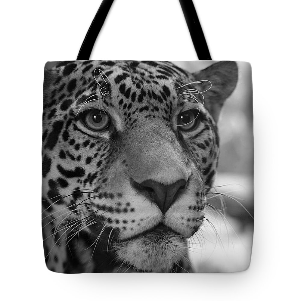 Jaguar Tote Bag featuring the photograph Jaguar In Black And White by Sandy Keeton