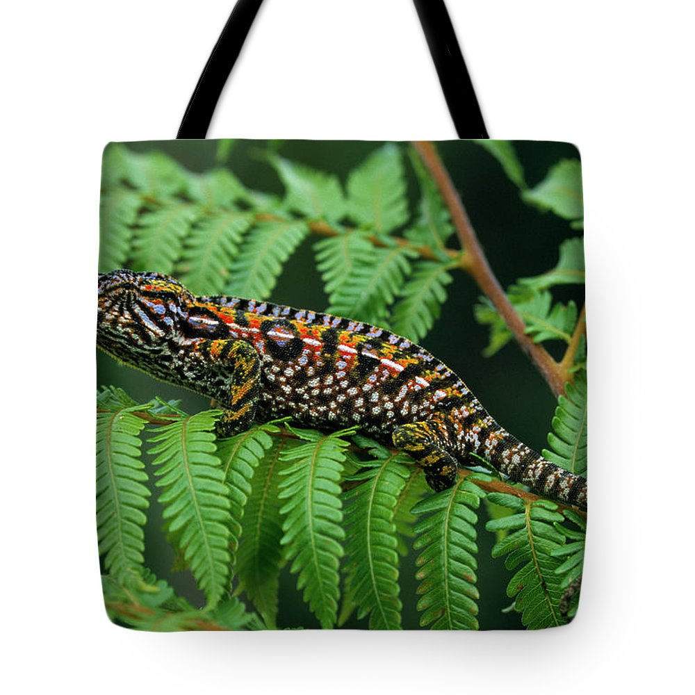 Fn Tote Bag featuring the photograph Jeweled Chameleon Furcifer Lateralis by Ingo Arndt