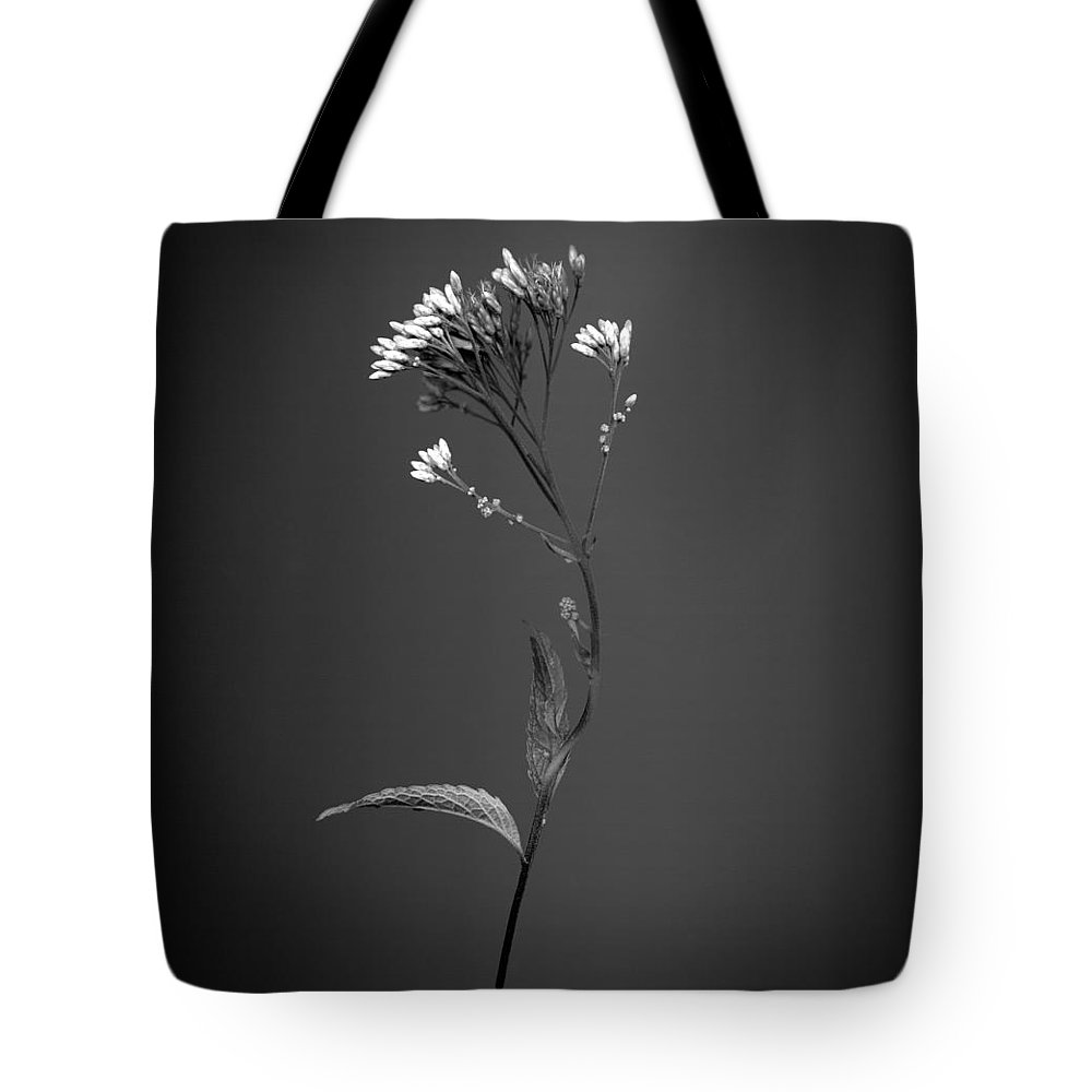Meadow Flowers Tote Bag featuring the photograph Joe Pye 1 by Simone Ochrym