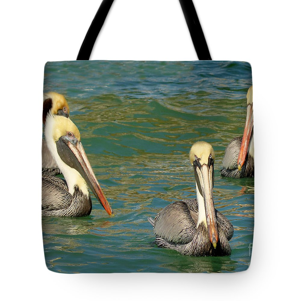 Brown Pelicans Tote Bag featuring the photograph Join The Club by Teresa A and Preston S Cole Photography