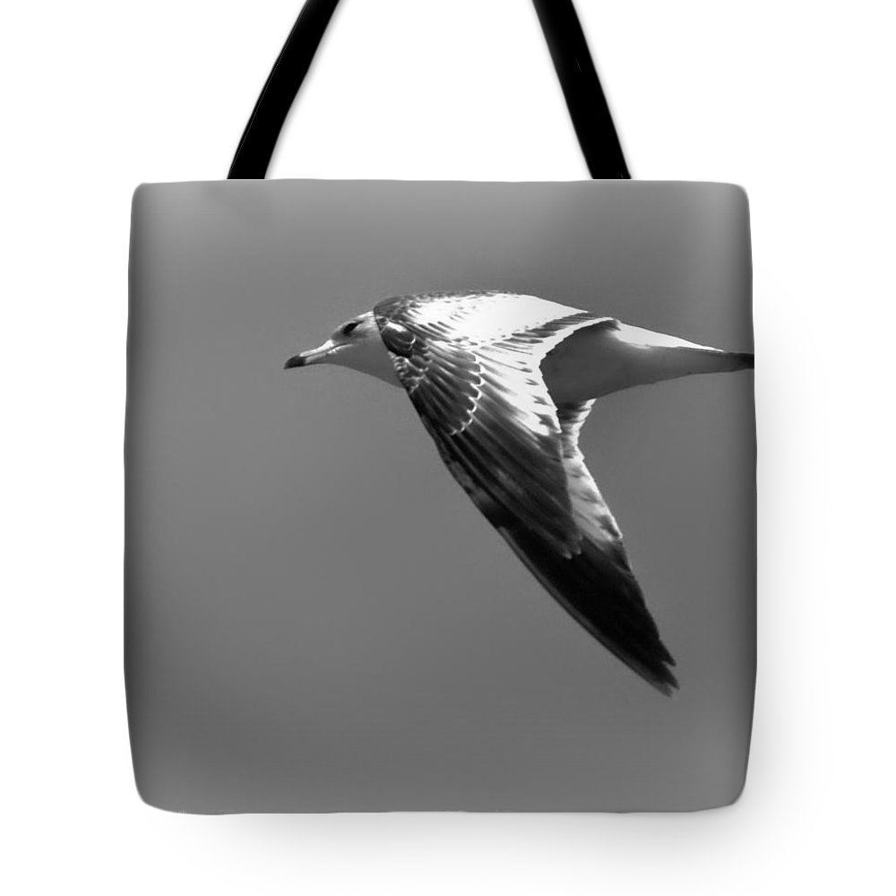 Seagull Tote Bag featuring the photograph Jonathan by Douglas Craig