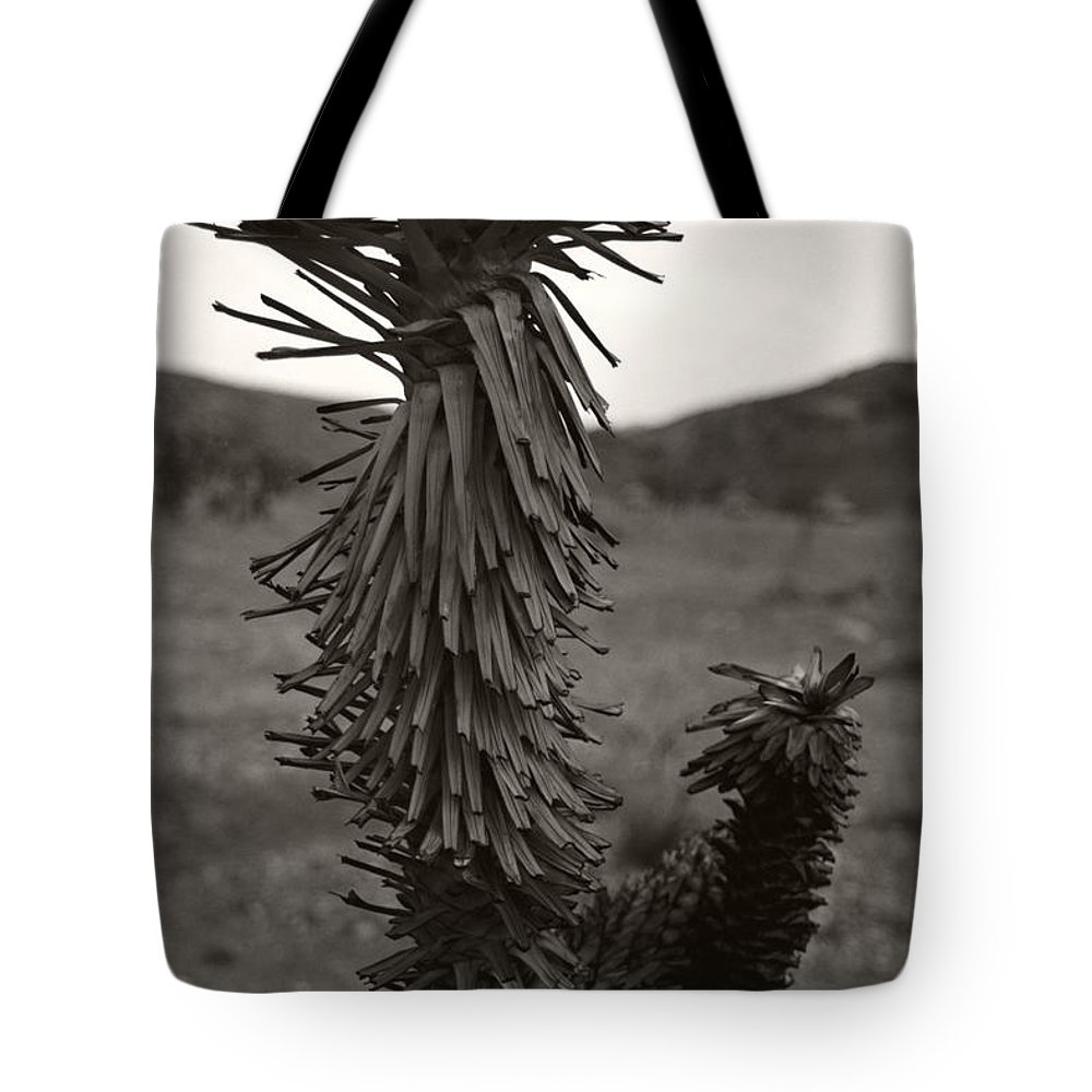 Tote Bag featuring the photograph Joshua Top Over Hills by Heather Kirk
