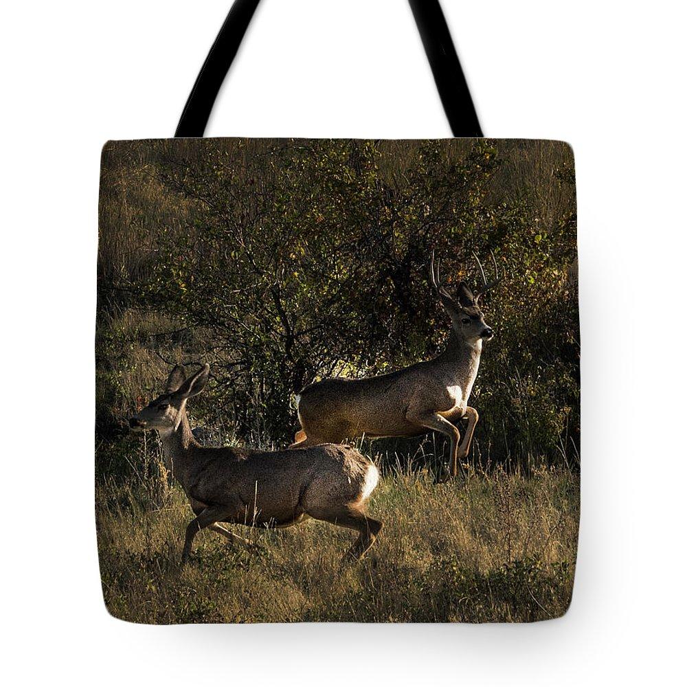 Deer Tote Bag featuring the photograph Jumping deer by Roy Nierdieck